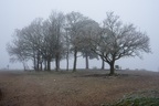 Jubilee Clump in Freezing Fog