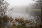 Foggy Bourley Lake