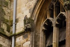 Church Peregrine
