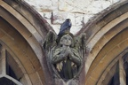 Peregrine Perched on Angel